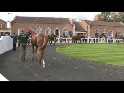 Tattersalls October Yearling Sale Book 1 Day Three 2012