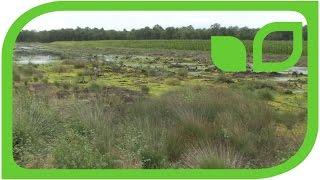 Torfabbau: Wo sich Landwirtschaft, Torfabbau und Naturschutz treffen Teil 10