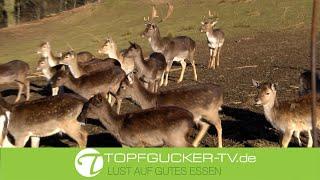 Marinierter Hirschbraten in Wacholder-Rotweinsoße | Wildrezept |  Topfgucker-TV