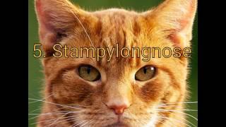 5. Stampy4. Dilgracy2. Cydogplays1. Mr rabbit