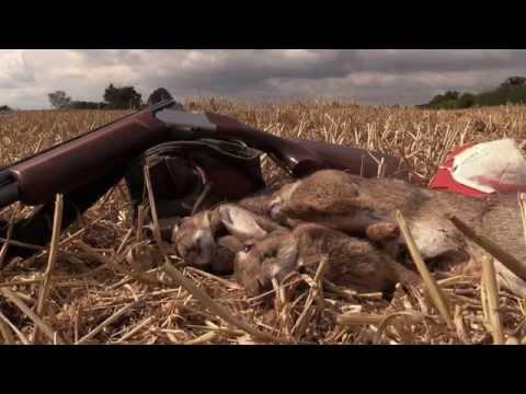 Shooting rabbits at harvest