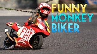 Video monkey biker ride a bike amazing funny video MP3, 3GP, MP4, WEBM, AVI, FLV Mei 2017