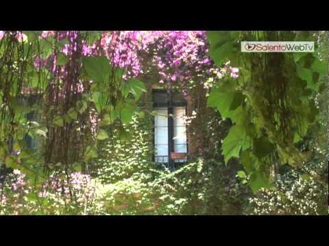 La cascata di foglie di vite americana a Palazzo Rollo: Cortili Aperti 2012 a Lecce