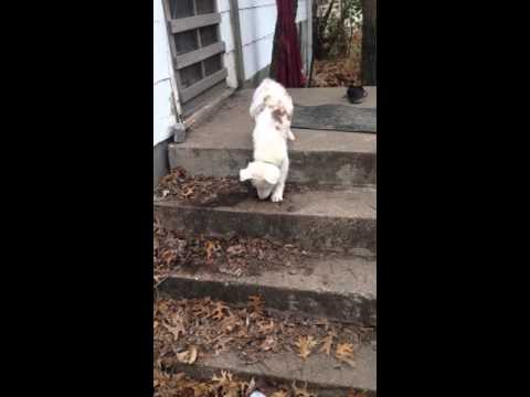 Amazing Video: This Blind And Deaf Puppy Walks Down Stairs For The First Time