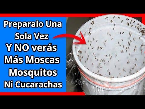 Si Pones Esto en Tu casa, 1 hora después NO verás NUNCA +  Mosca, Mosquito o Cucaracha