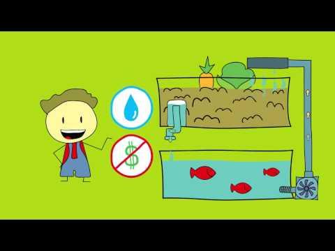 l'acquaponica: come coltivare verdure coi pesci rossi
