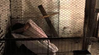 Nonton Sanatorium Trailer Film Subtitle Indonesia Streaming Movie Download