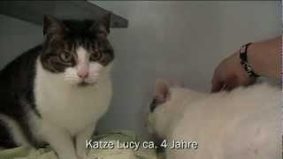 Tierheim Mölln - Miau Der Woche 40/12 Kater Komet, Katze Lucy 02.10.2012