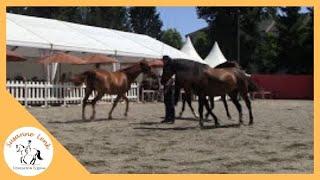 Tarbes France  City new picture : Festival del Caballo Equestria Tarbes/Francia - Festival chevaux Equestria Tarbes/France