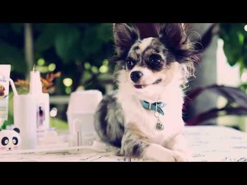 Чем и как чистить зубы собаке в домашних условиях