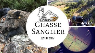►► Chasse aux sangliers Best-Of 2016 - Cerfs, Chevreuils, Sangliers  -  ChasseTV