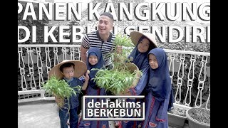 Video Panen Kangkung di Kebun Sendiri! - deHakims Berkebun MP3, 3GP, MP4, WEBM, AVI, FLV Februari 2019