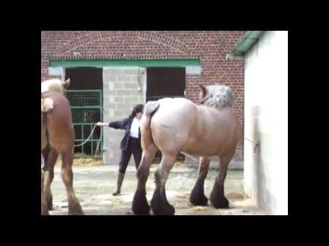 Horsemen Breeding Horses