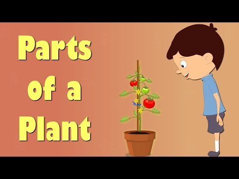 Parts of a Plant _ Videos for Kids