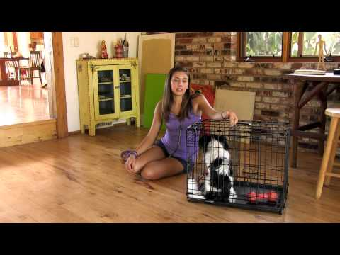 How To Potty Train Your Dog In 7 Days | Super Awesome Dogs