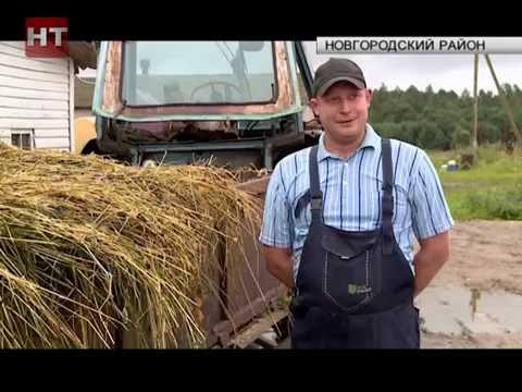 Фермер Максим Сауров рассказал о государственных инвестициях в малый и средний бизнес
