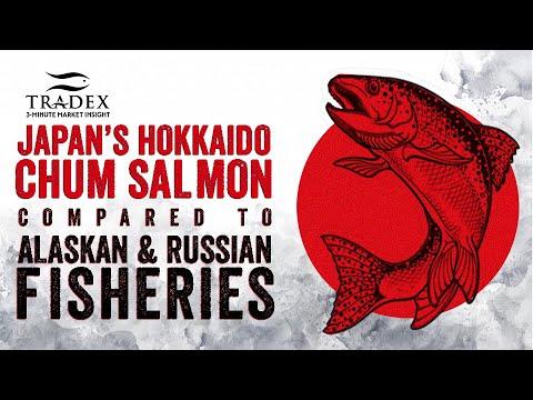 3MMI - Hokkaido, Russian and Alaskan Chum's Update