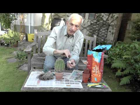 How to take cactus cuttings [video]