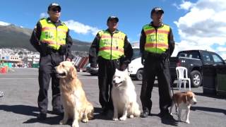 Quito. La Dirección Nacional de Antinarcóticos (DNA) y el Centro Regional de adiestramiento canino (CRAC) participaron en la...