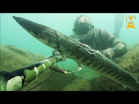 Pesca Sub: