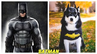 Video Superheroes Characters in Real Life Dogs MP3, 3GP, MP4, WEBM, AVI, FLV Agustus 2019