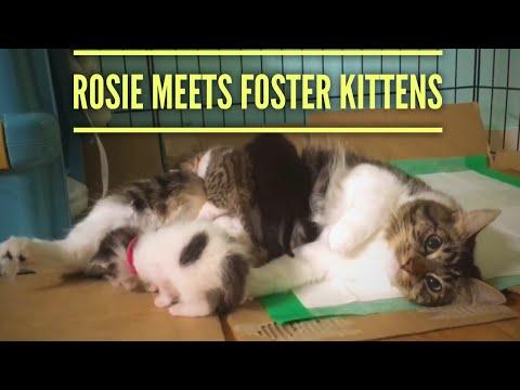 rosie-la-gatta-salva-9-gattini-randagi-allo-stesso-modo-in-cui-lilo-lhusky-salvo-lei