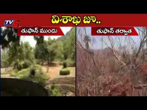 Visakhapatnam Zoo Park | Before Cyclone after Cyclone : TV5 News