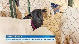 Facilpa: exposição de ovinos movimenta o mercado e debate desafios do setor