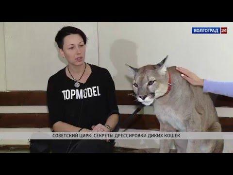 Советский цирк: секреты дрессировки диких кошек. Наталья Исайчева, дрессировщик