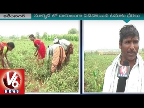 Farmers-in-Concern-with-lack-of-Minimum-Cost-Price-to-Tomato-Crop-Karminagar-V6-News-06-03-2016