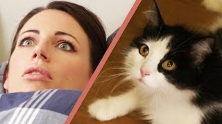 10 Signs Your Cat Owns You