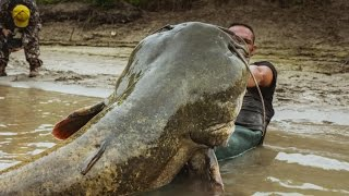 MONSTER ITALIAN CATFISH CAUGHT ON CAMERA by YURI GRISENDI