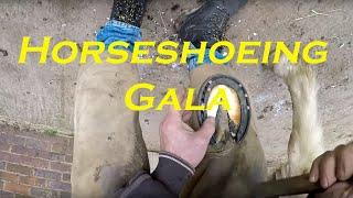 Download Video Horseshoeing Gala MP3 3GP MP4