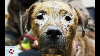 They abandoned her because she was sick - Zoe, the dog with the saddest eyes by The Orphan Pet