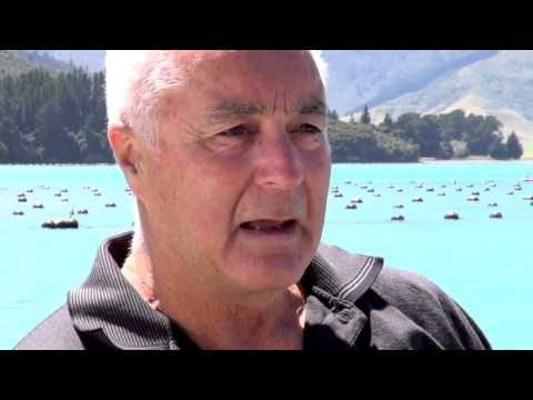 Lyprinol - New Zealand -  Farming the Green Lipped Mussel