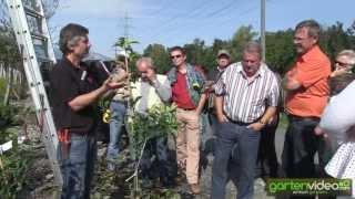 #1372 Wachstum bei Apfelniederstämmen bremsen (Schweizerdeutsch)