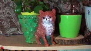 Мои подарки на день Валентина ❤ My gifts on Valentine's Day ❤ orchid equestris , lemon Tree limequat