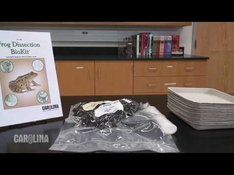 Selecting a Preserved Specimen for your Dissection Lab