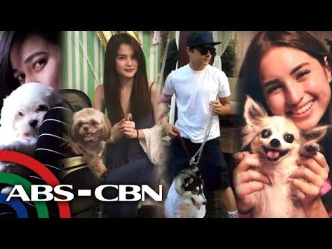 Rated K: Kapamilya celebrities show off their pet dogs (видео)