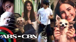 Video Rated K: Kapamilya celebrities show off their pet dogs MP3, 3GP, MP4, WEBM, AVI, FLV Desember 2018