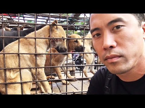 GRAPHIC: This Guy Rescues Dogs From Torture And Slaughter In Asia