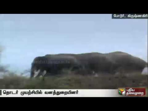 Forest-officials-struggle-to-chase-away-five-elephants-in-Krishnagiri