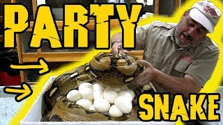 Snake Party Zoo Meetup by Prehistoric Pets TV
