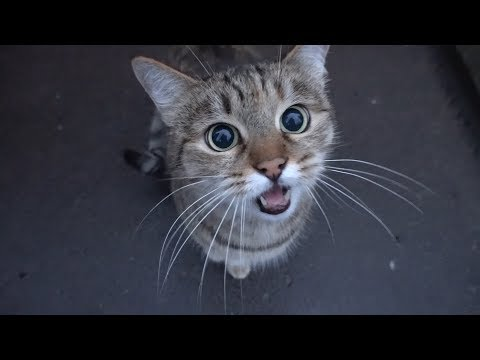 Play this video cute cat is saying something to me