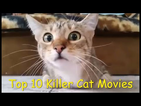 Top 10 KILLER CAT Movies For AL Horror Trailers