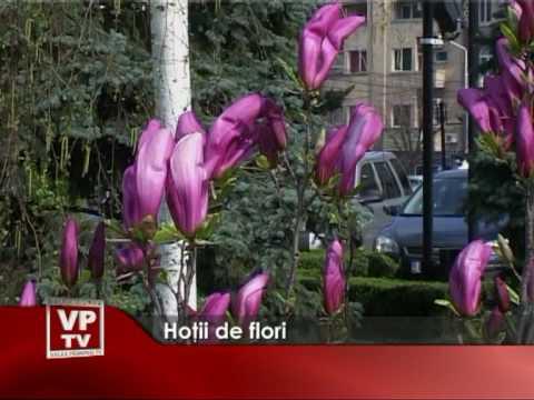 Hotii de flori