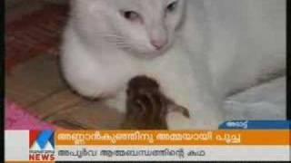 cat rises squirrrel on manorama news india