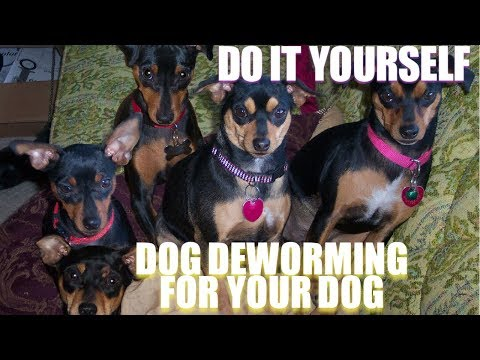 Do it yourself deworming for your dog