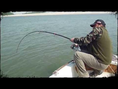 incredibile cattura nel po, pesce siluro da oltre 2 metri!