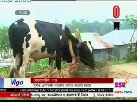 regions Scarcity of food for cattle in flood hit areas (19-08-2017)